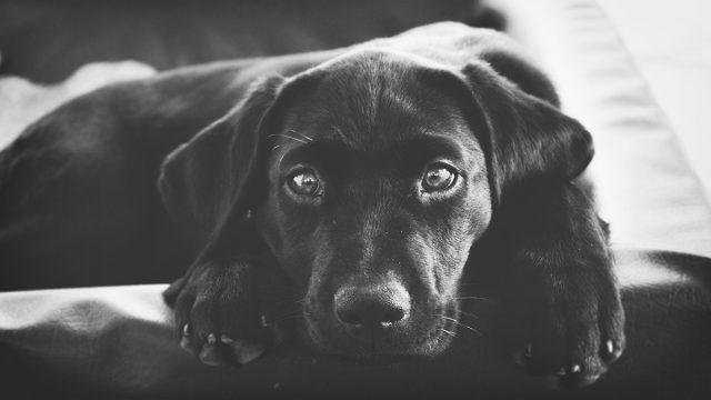 命の尊さを考える動物が主役のクラウドファンディング5選