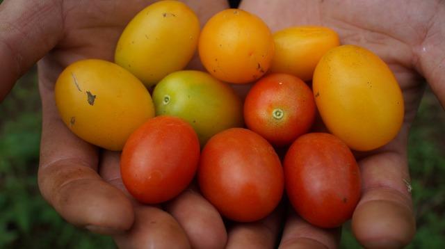 農業特化型クラウドファンディング「クラウドマルシェ」の注目プロジェクトをご紹介